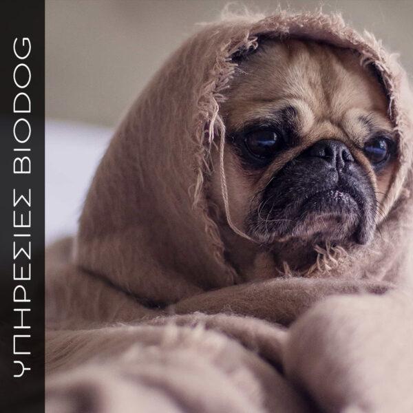 Διαιτολόγιο αποκλεισμού για σκυλιά με αλλεργίες δυασανεξίες