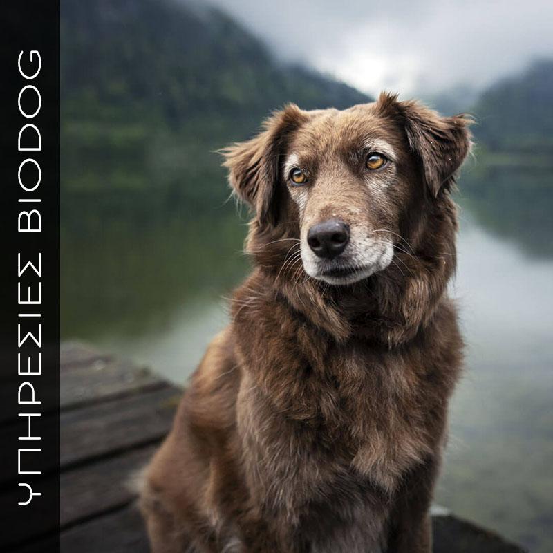 Διαιτολόγιο για ηλικιωμένο σκυλί