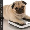Διαιτολόγιο για υπέρβαρο σκυλί