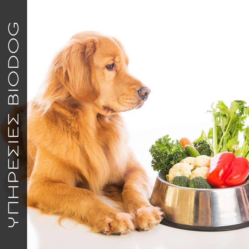 Μαγειρεύω υγιεινά και φυσικά για τον σκύλο μου