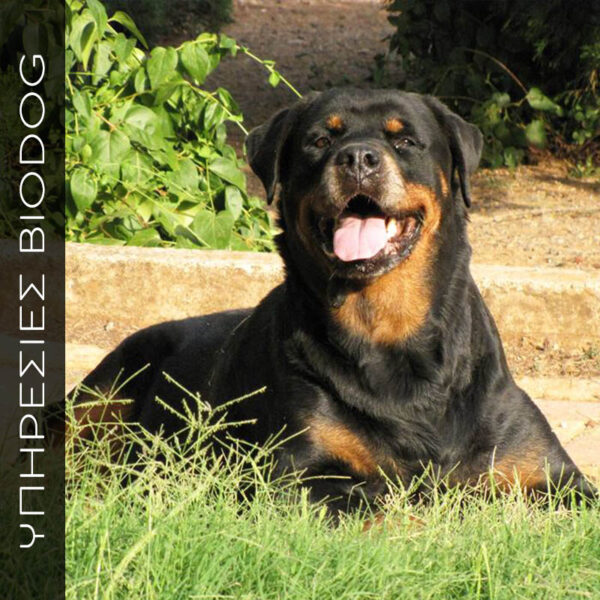 Υποστήριξη/εκπαίδευση κηδεμόνων ενήλικων σκυλιών