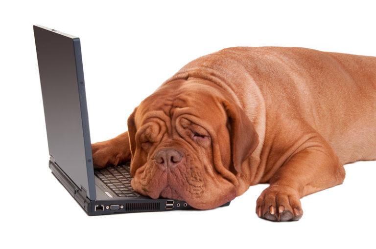 Πώς εξανθρωπίζουμε τα σκυλιά μας