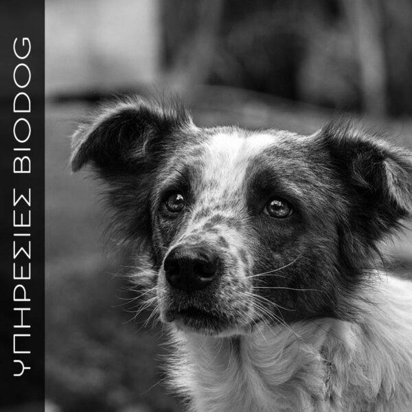 Φροντίδα του ηλικιωμένου σκύλου