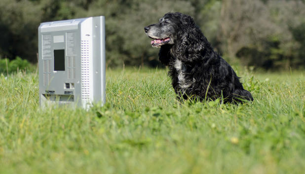 Τα σκυλιά μας και η τηλεόραση