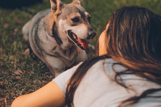 Η ψυχολογία στη σχέση ανθρώπου – σκύλου