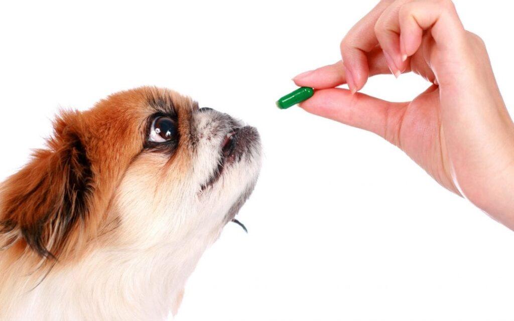 Ποιές είναι οι πιο σημαντικές βιταμίνες για τον σκύλο μας