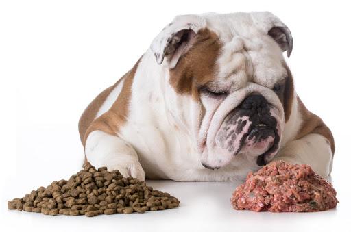 Κριτήρια διαμόρφωσης μιας ισορροπημένης διατροφής σκύλων