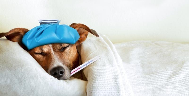 ασθένειες που συνδέονται άμεσα με τη διατροφή του σκύλου