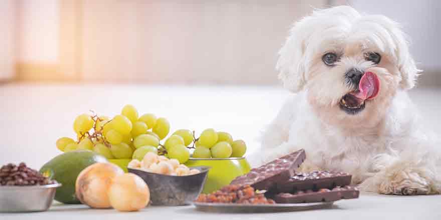 Η ισορροπημένη διατροφή του σκύλου.