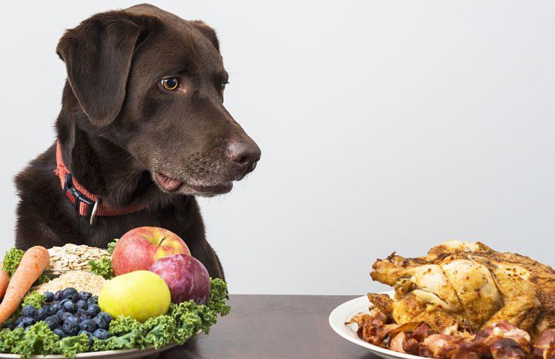 Μαγειρευτό φαγητό για τον σκύλο