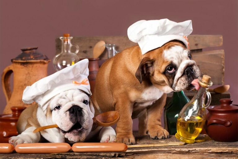 Μαγειρευτό φαγητό σκύλου