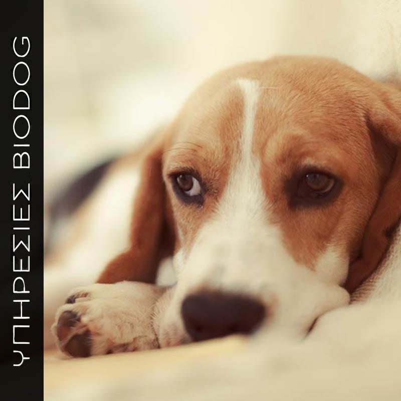 Η φροντίδα του άρρωστου σκύλου