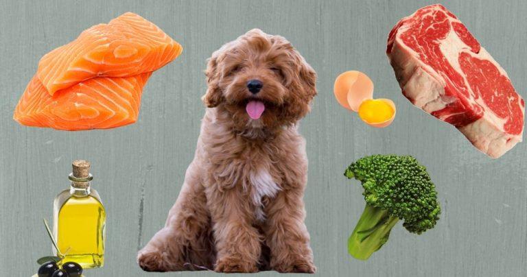 Φυσικά συμπληρώματα διατροφής για σκύλους